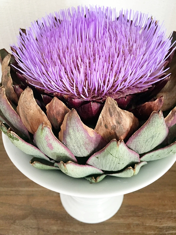 blooming_artichoke