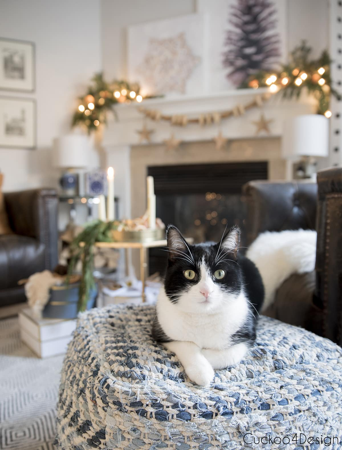 tuxedo sitting in front of fireplace with neutral and natural decor