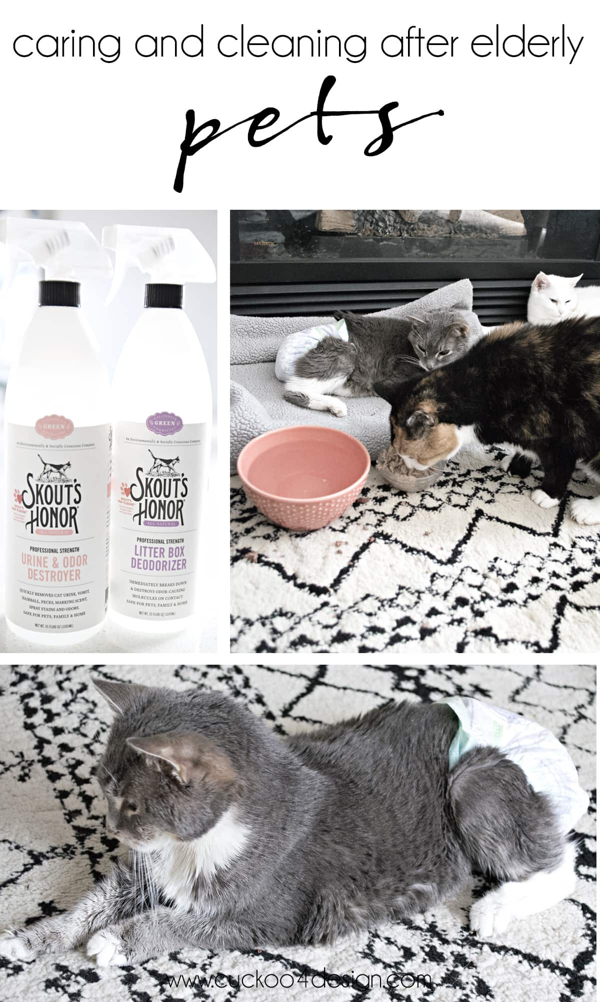 tips for caring and cleaning after elderly cats