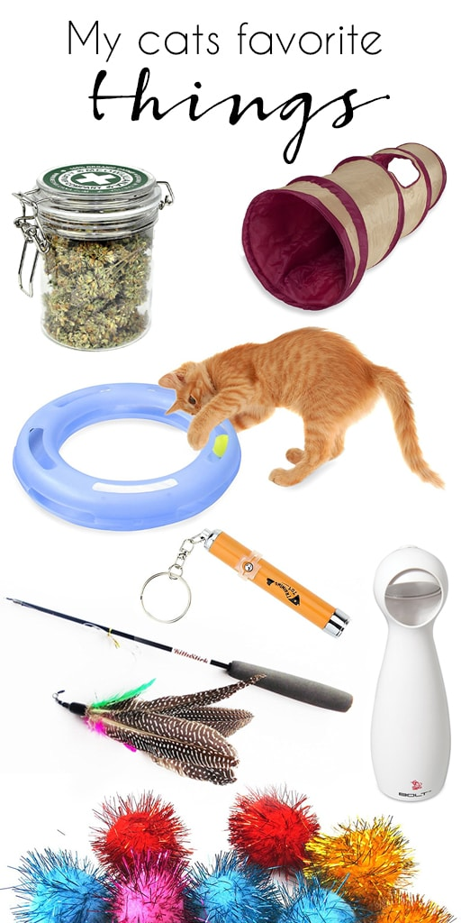 my cats favorite things to play with