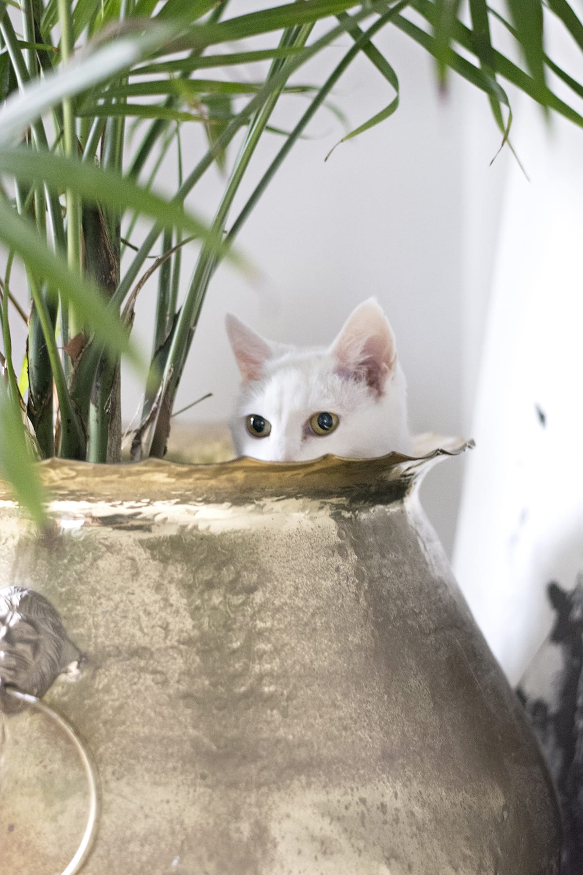 white cat hiding in flower pot