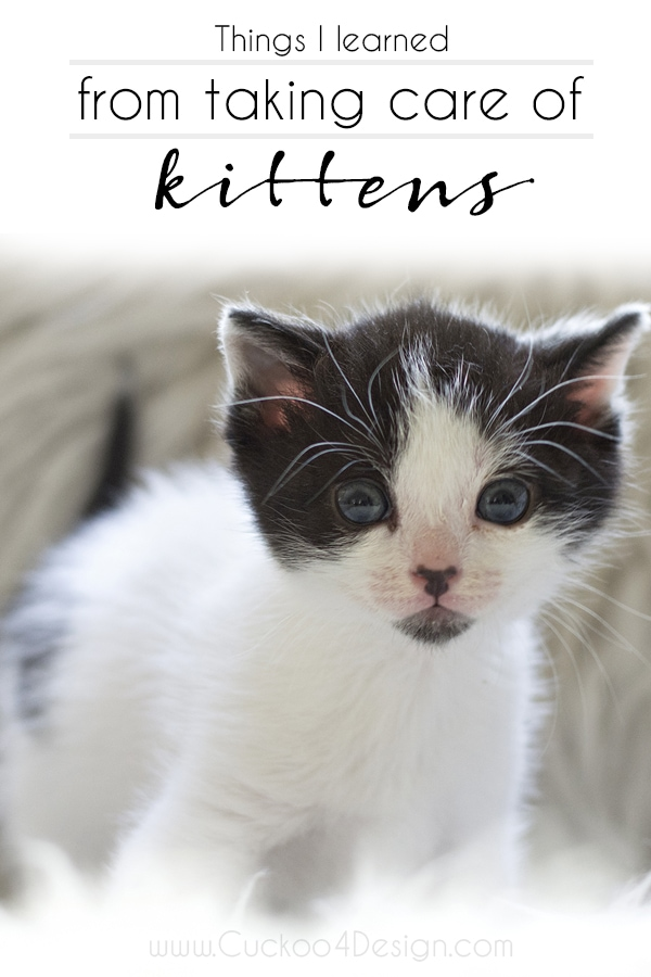 Things I have learned from taking care of kittens (bottle feeding and general care) | How to take care of kittens | kitten care | #kittencare #caringforkittens