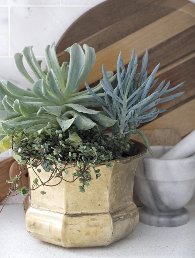 Succulent arrangement idea