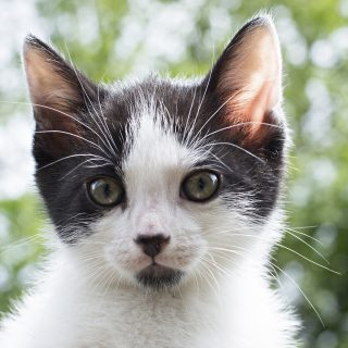 Friday Favorites: Kitten Update