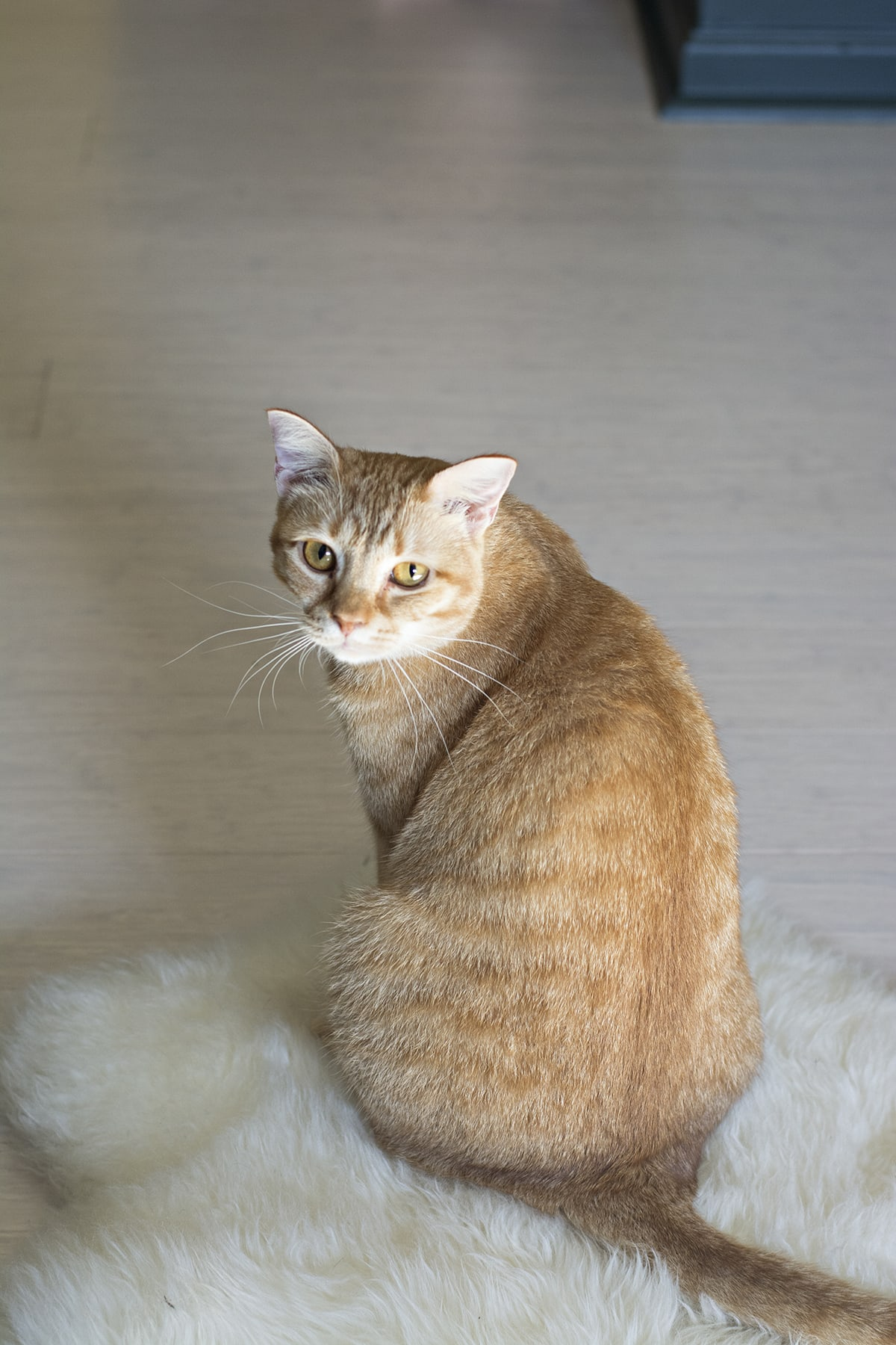 cute orange tabby cat