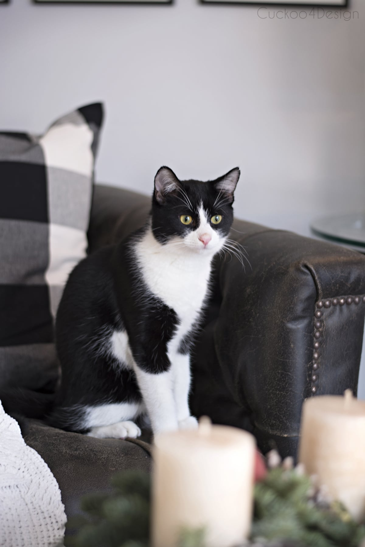 our tuxedo kitty Willy