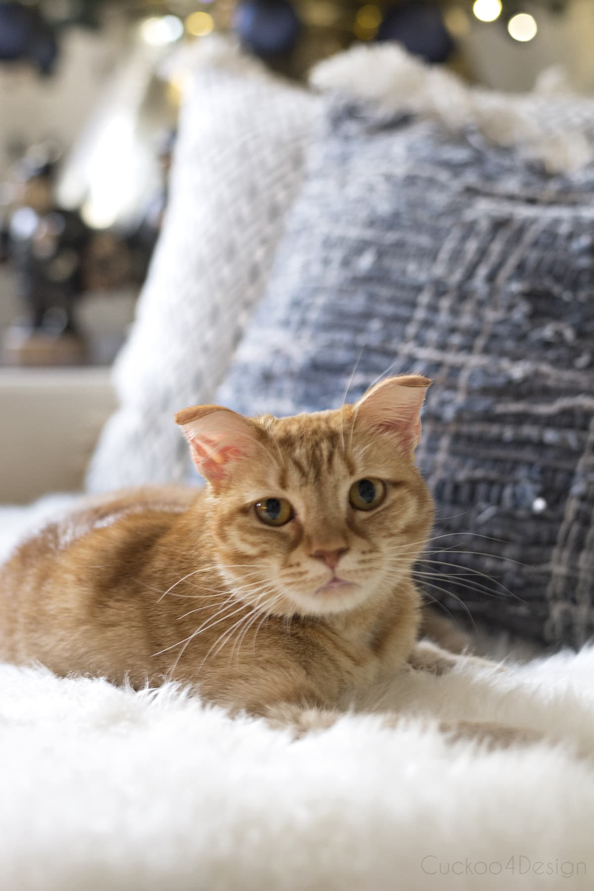 orange tabby relaxing on couch