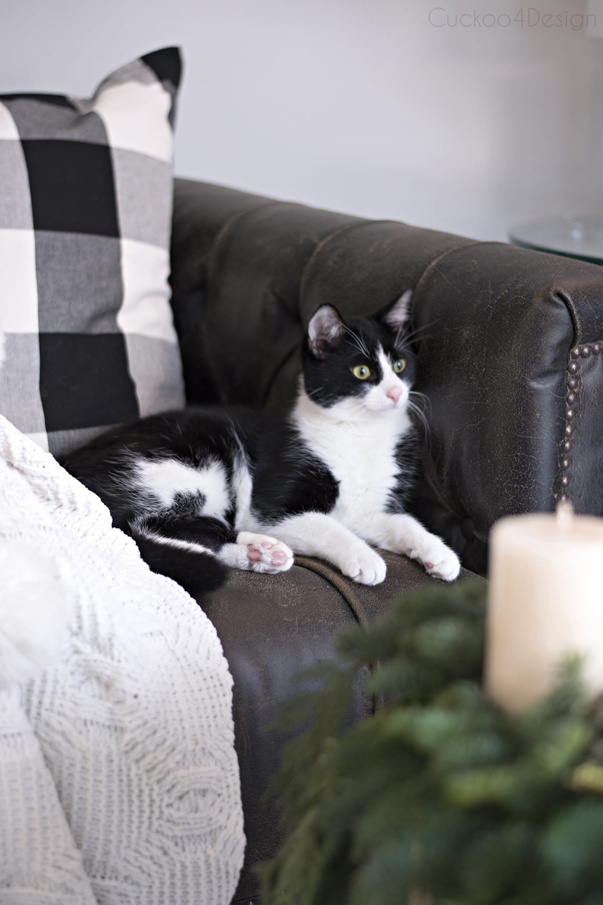 Christmas tuxedo kitty | black and white cat