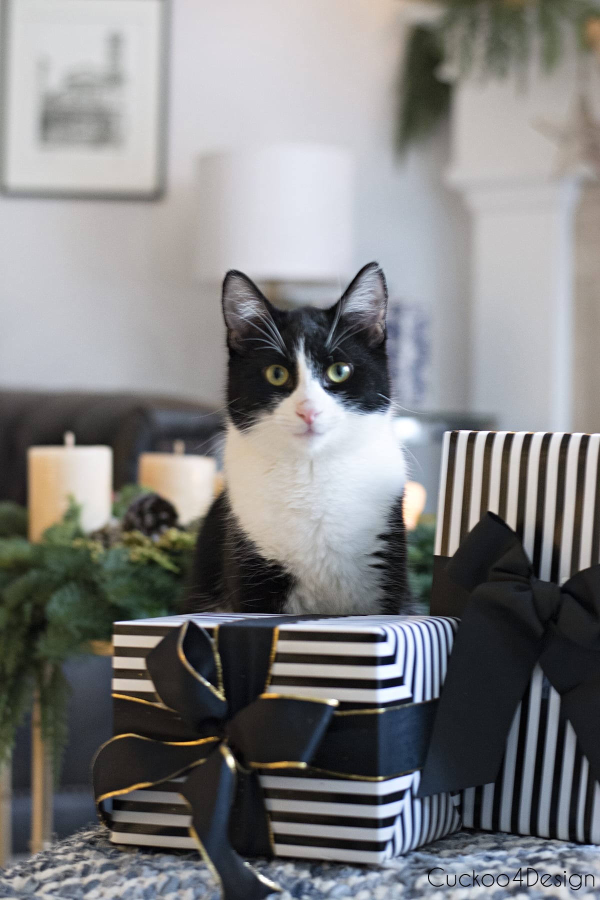black and white tuxedo cat posing with black and white presents