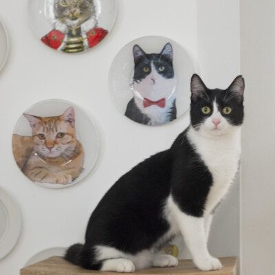 DIY pet portrait painting on plates