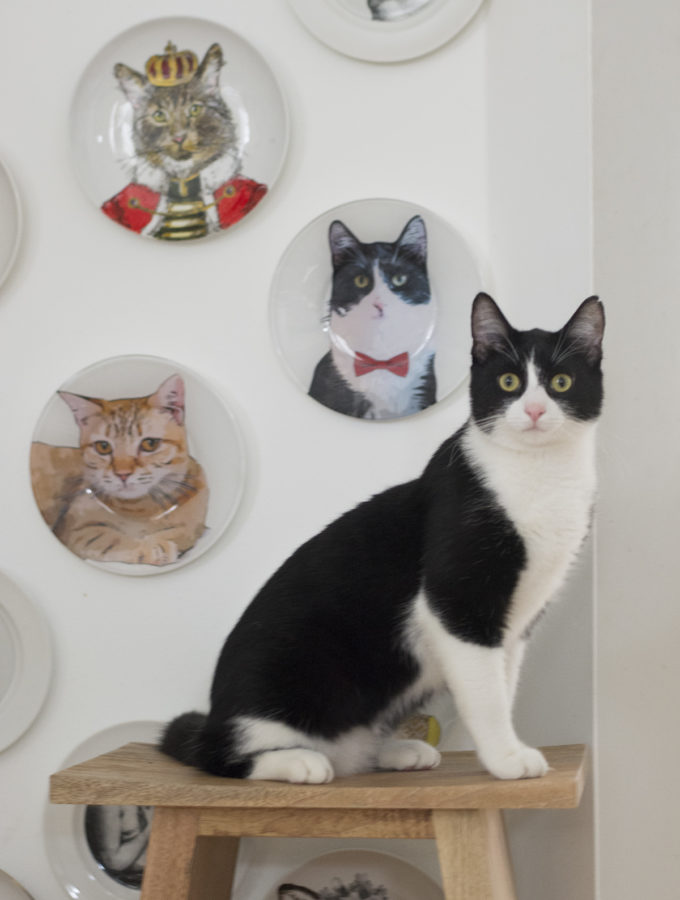 How to make a personalized plates of your cats | How to make a personalized_salad_plate of your pet for walldecor
