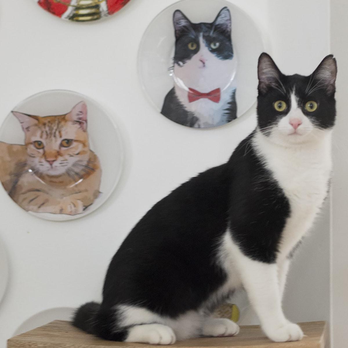 DIY pet portrait painting on plates