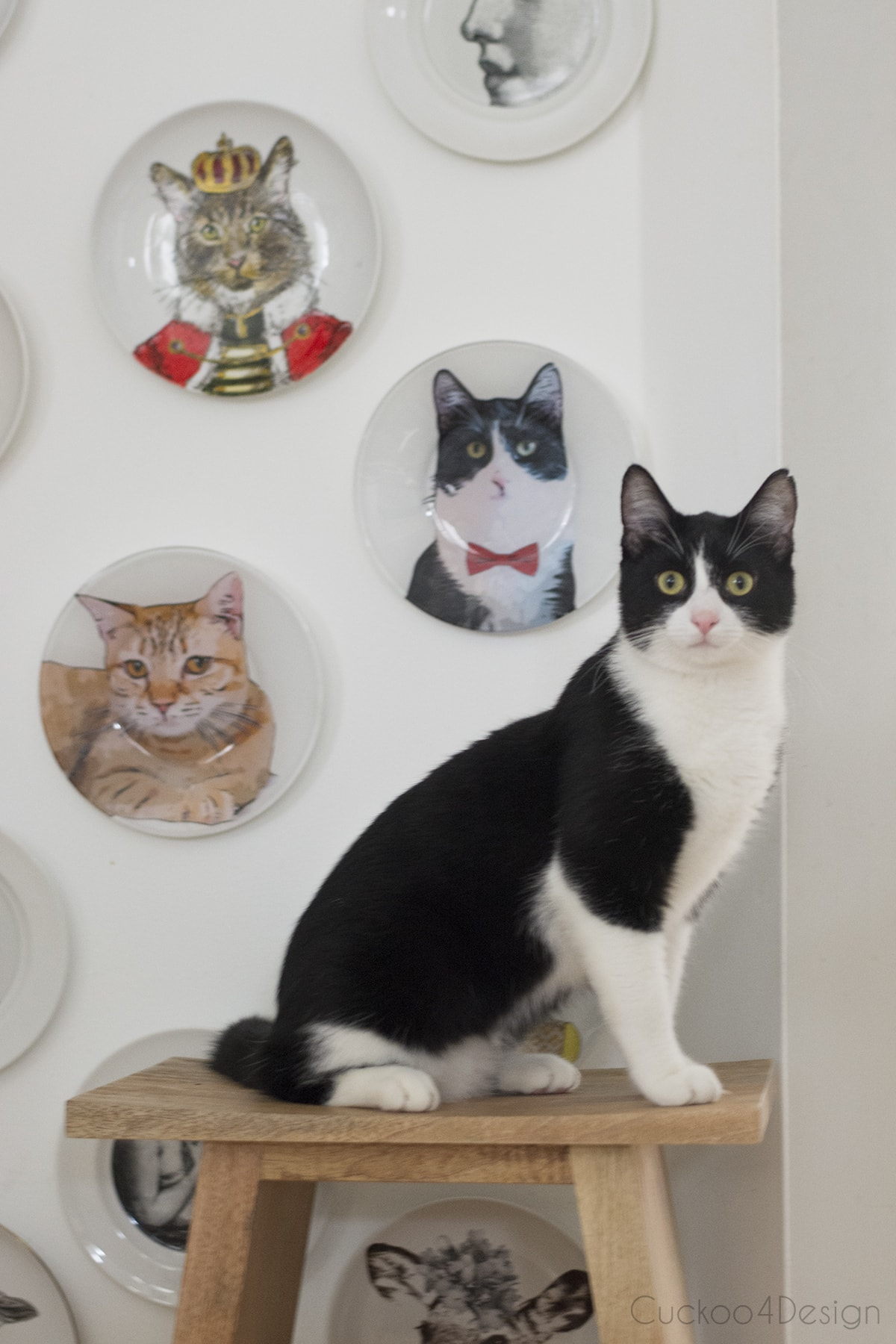 black and white tuxedo cat posing in front of his custom wall plate