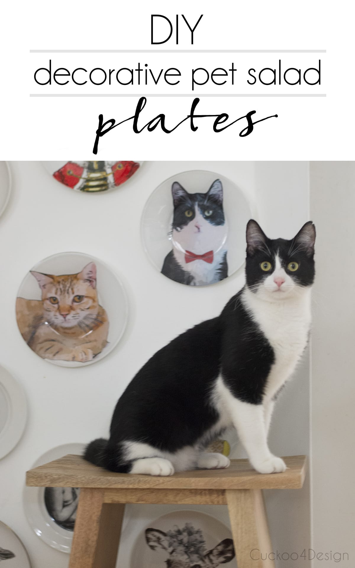 DIY decorative pet salad plates | DIY decorative animal plates | DIY decorative plates | decorative pet plates | handmade plates for a gallery wall | how to make memorative plates of your pets | anthropomorphic animal plates | plate gallery wall | dapper animal salad plates | how to turn your pet photos into art | pet portraits