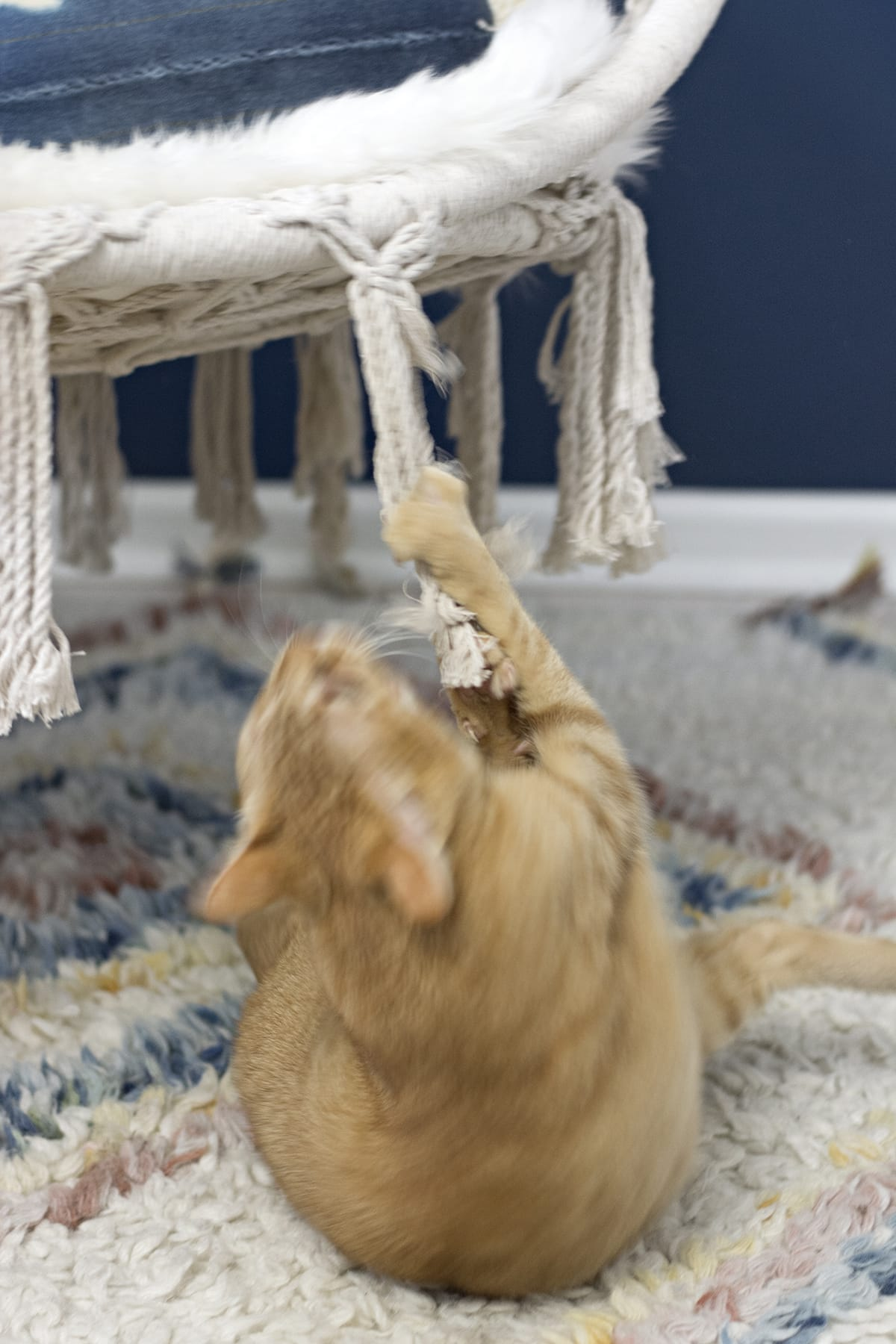 cat attacking a macrame hanging chair