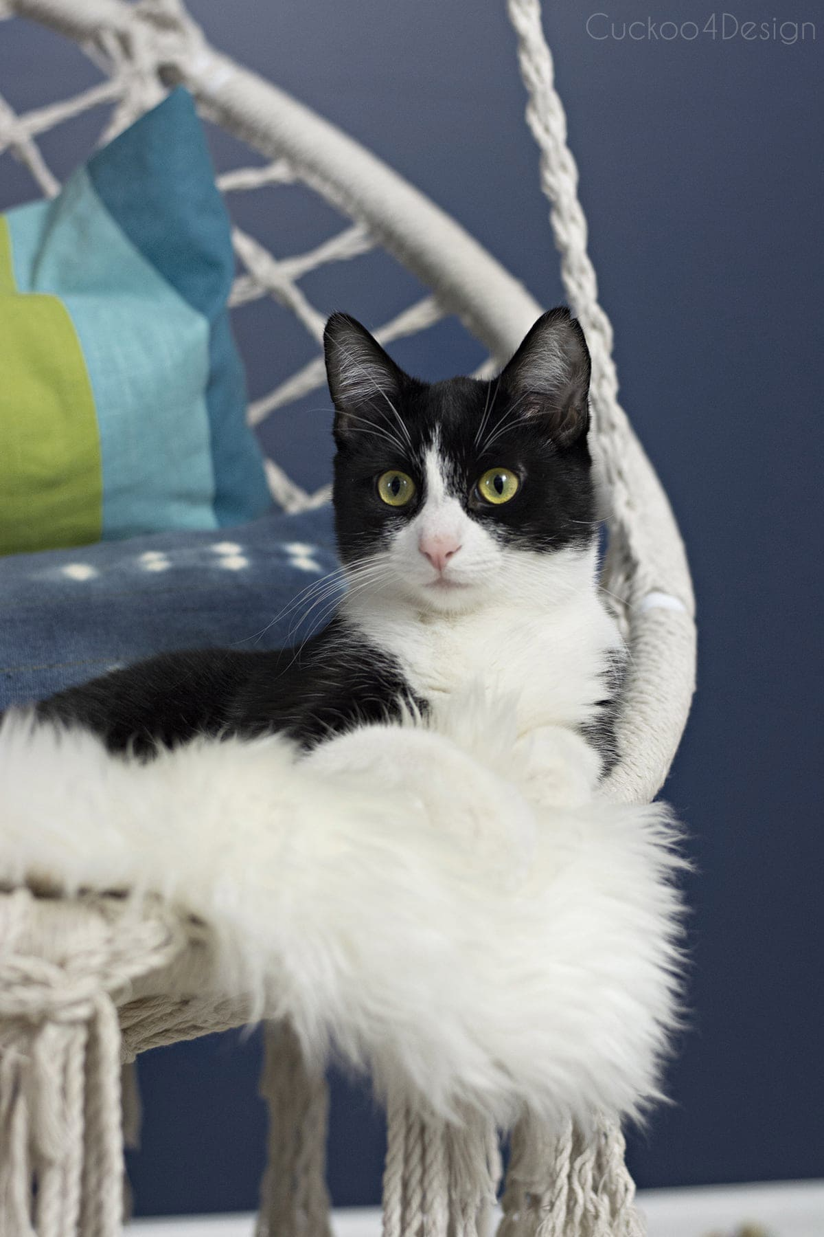tuxedo cat lounging on macrame hanging chair in blue girls room