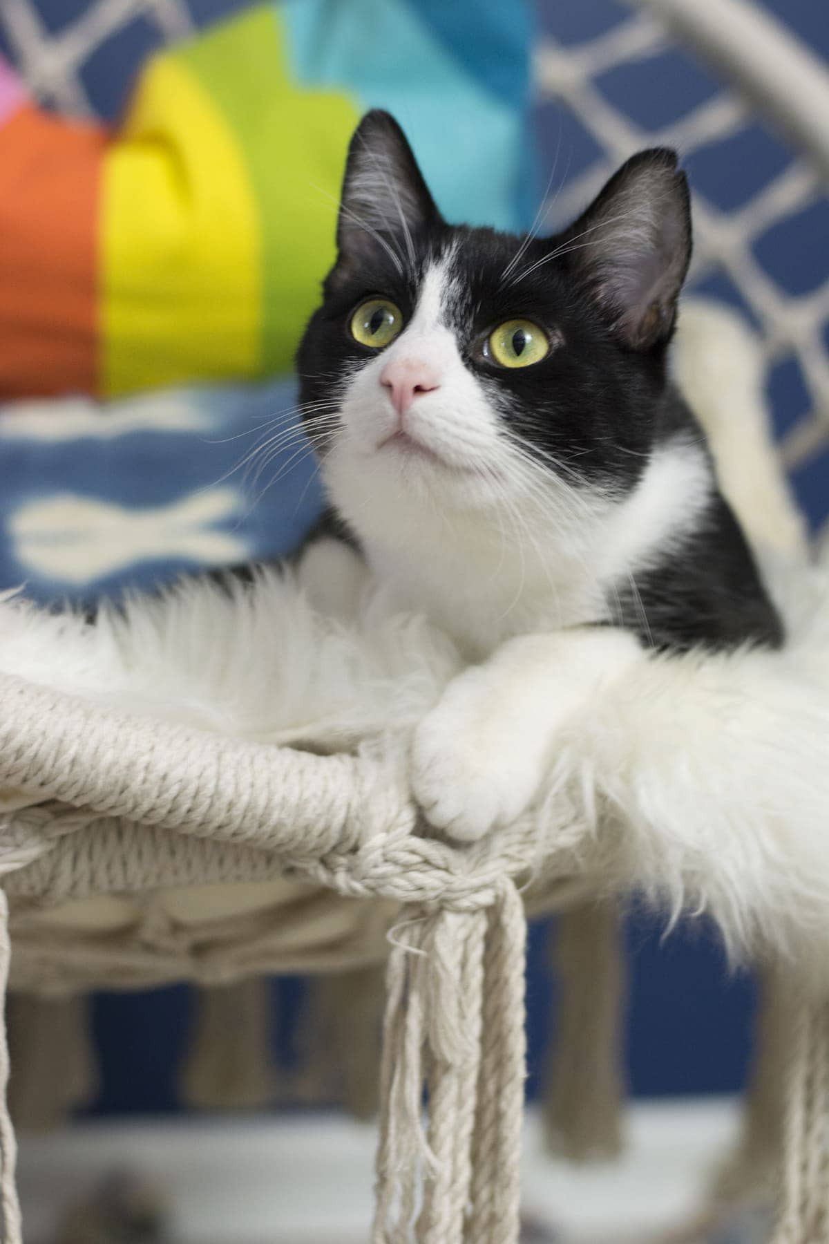 tuxedo cat sitting in macrame hanging chair in a colorful girls bedroom
