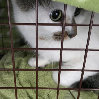 the same cat in TNR trap
