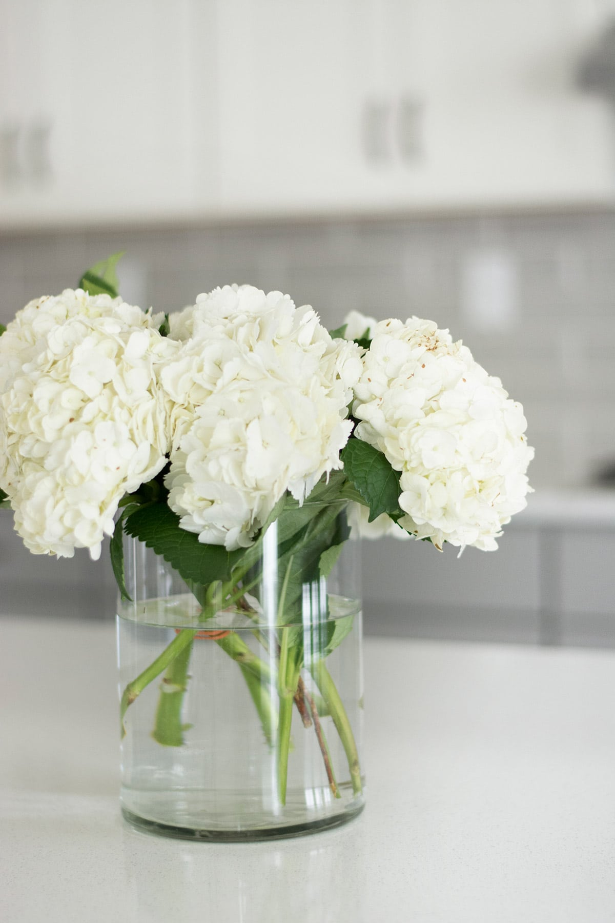hydrangeas on white quartz kitchen counter