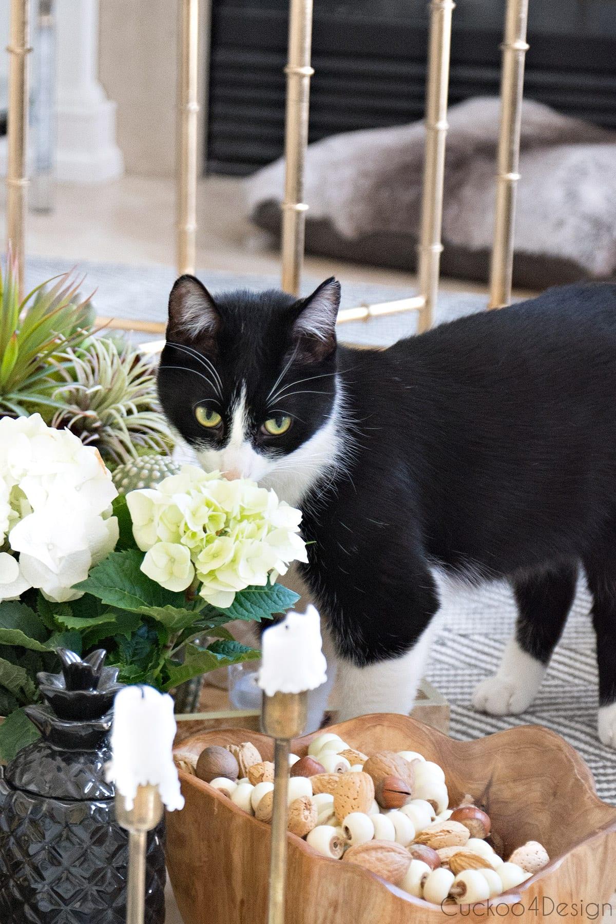 tuxedo cat smelling flowers