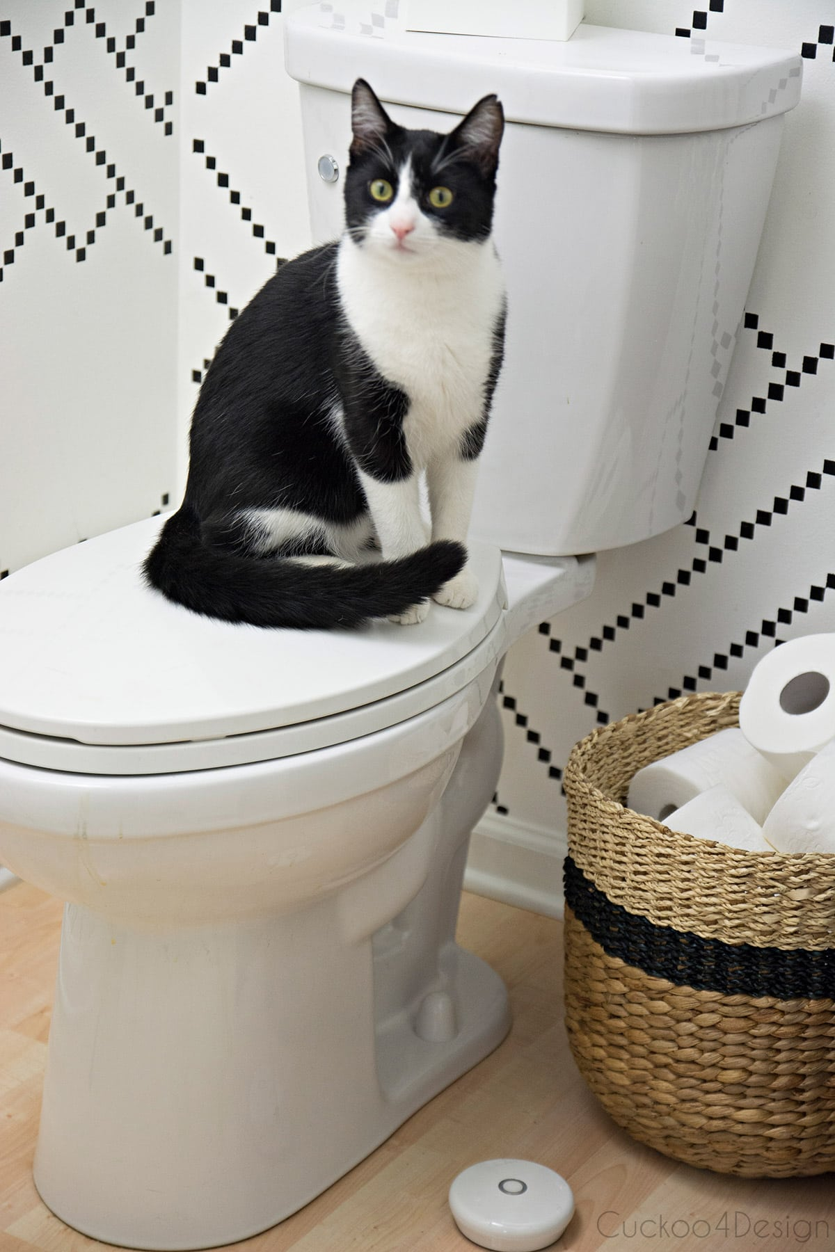 cat sitting on toilet to alert for water leak