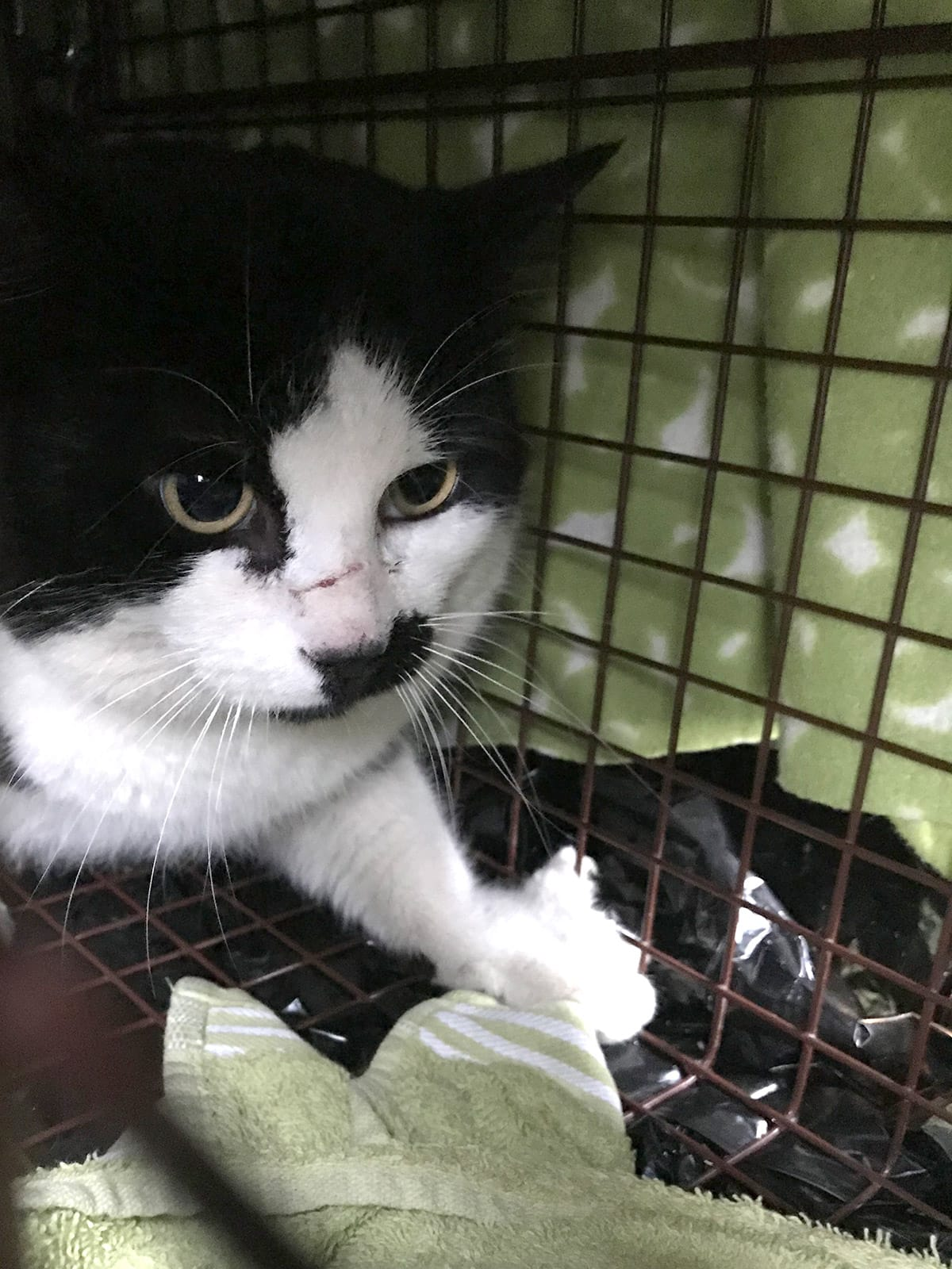 trapping neutering and releasing feral neighborhood cats