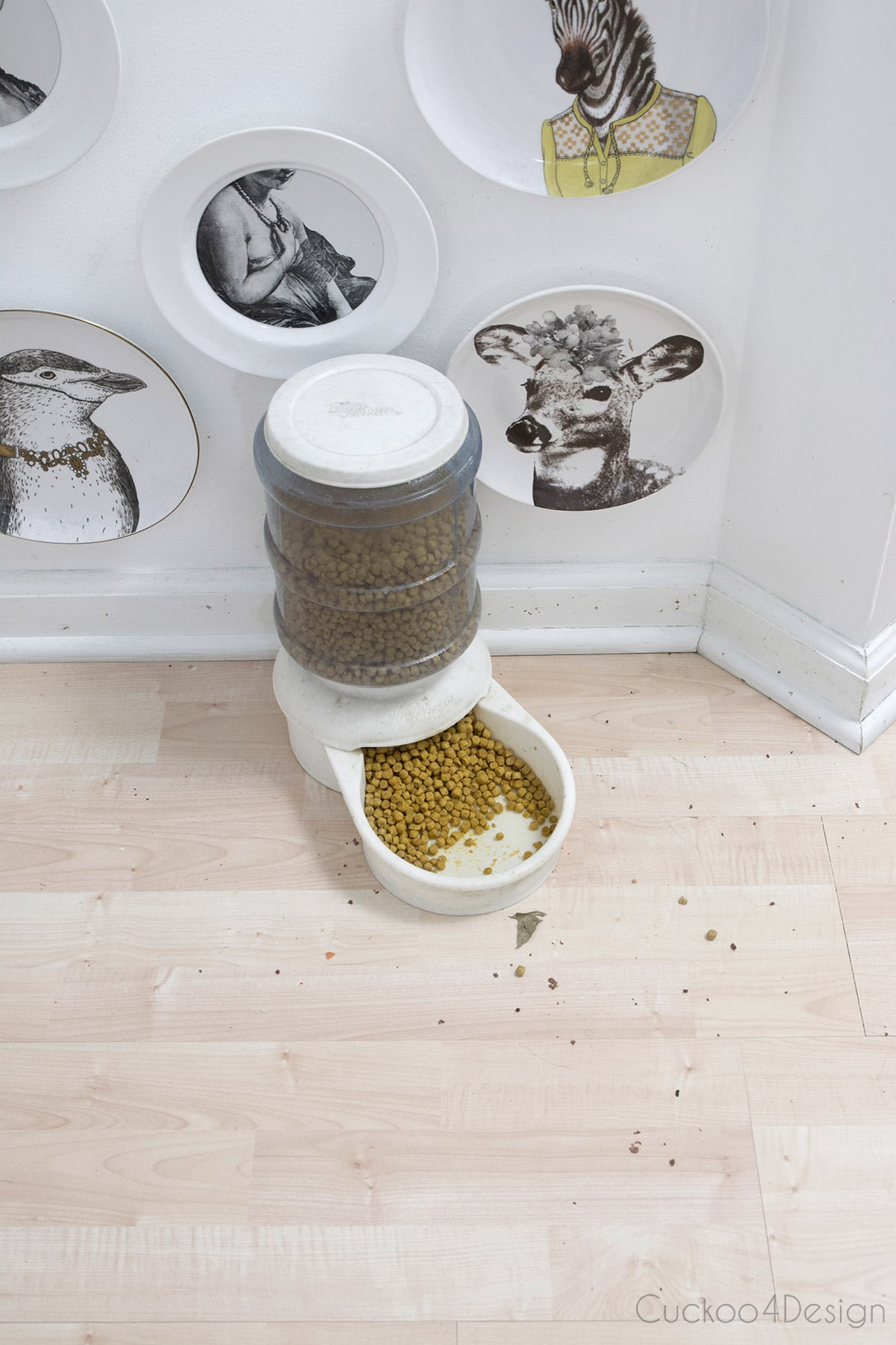 pet food bowl mess