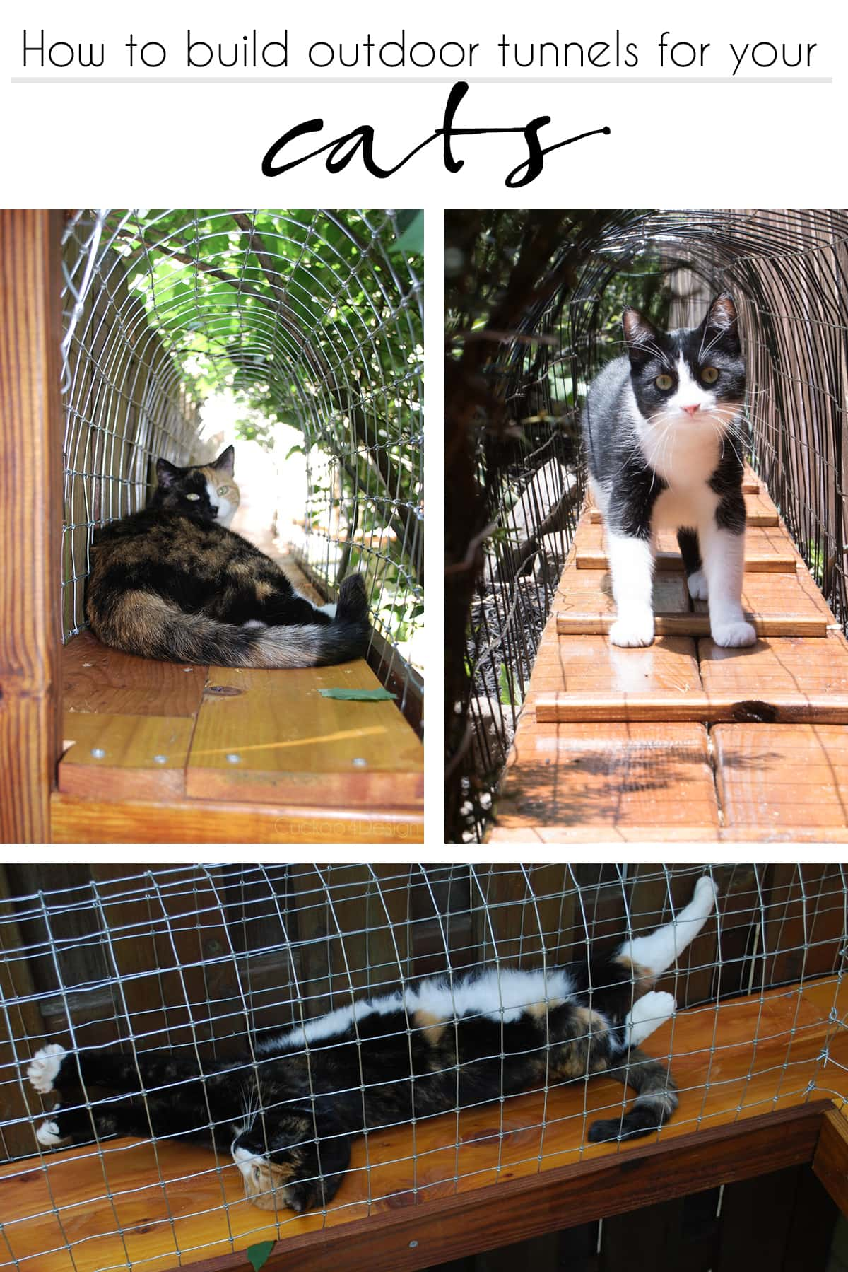 How to build an outdoor cat tunnel for your cats