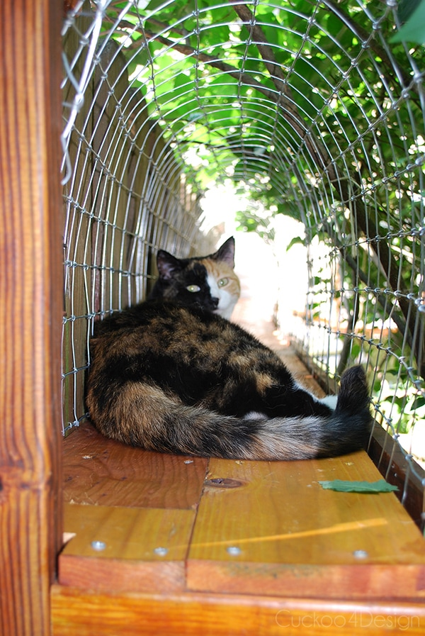 outdoor cat enclosures connected with cat tunnels