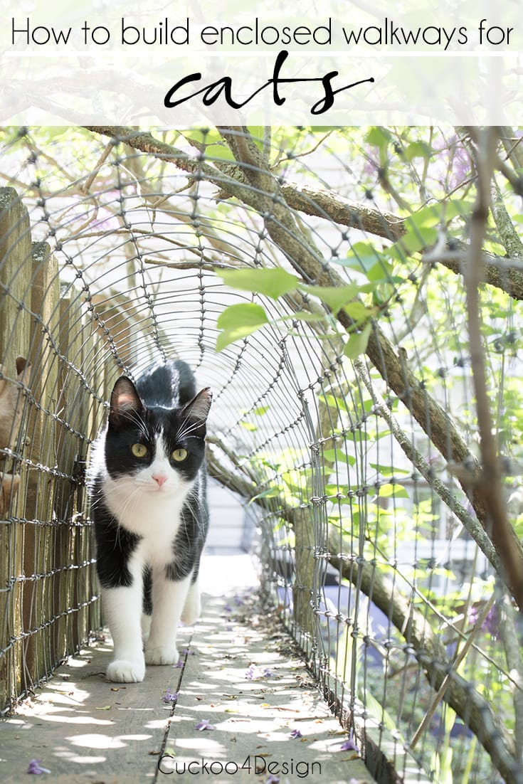 How to build enclosed walkways for cats