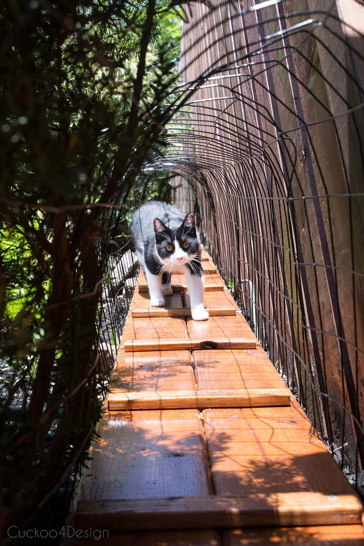cat walking in outdoor cat tunnel