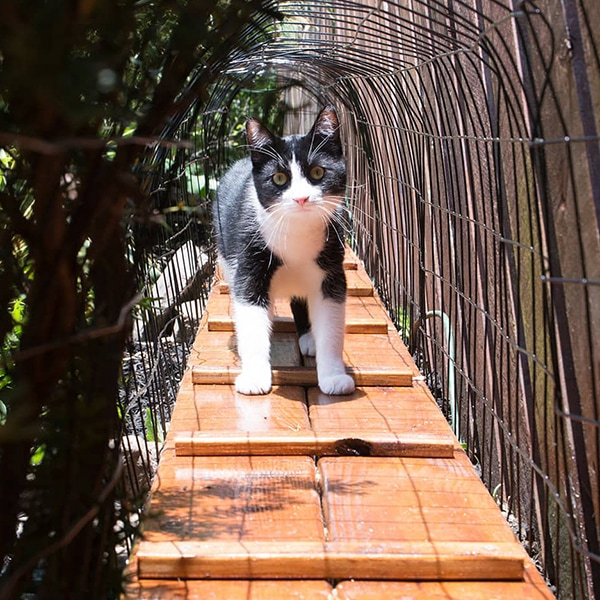 How to build an outdoor cat tunnel