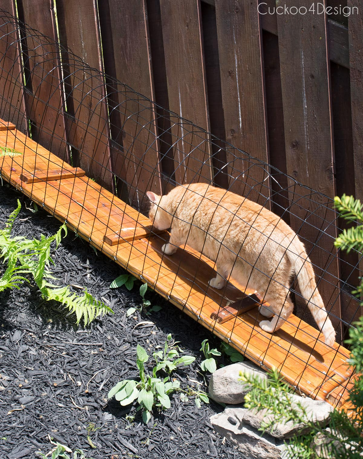 cat using enclosed outdoor cat tunnel
