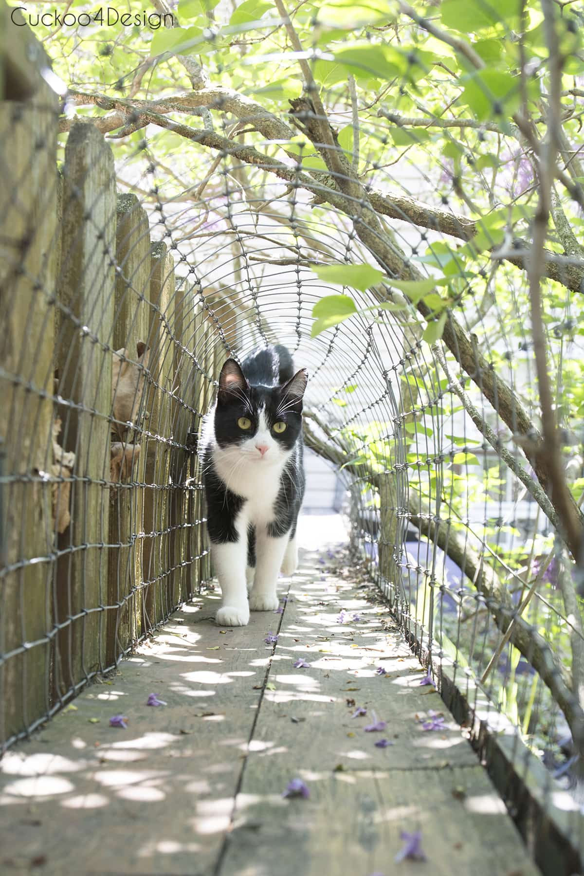 cat walking inn outdoor cat tunnels