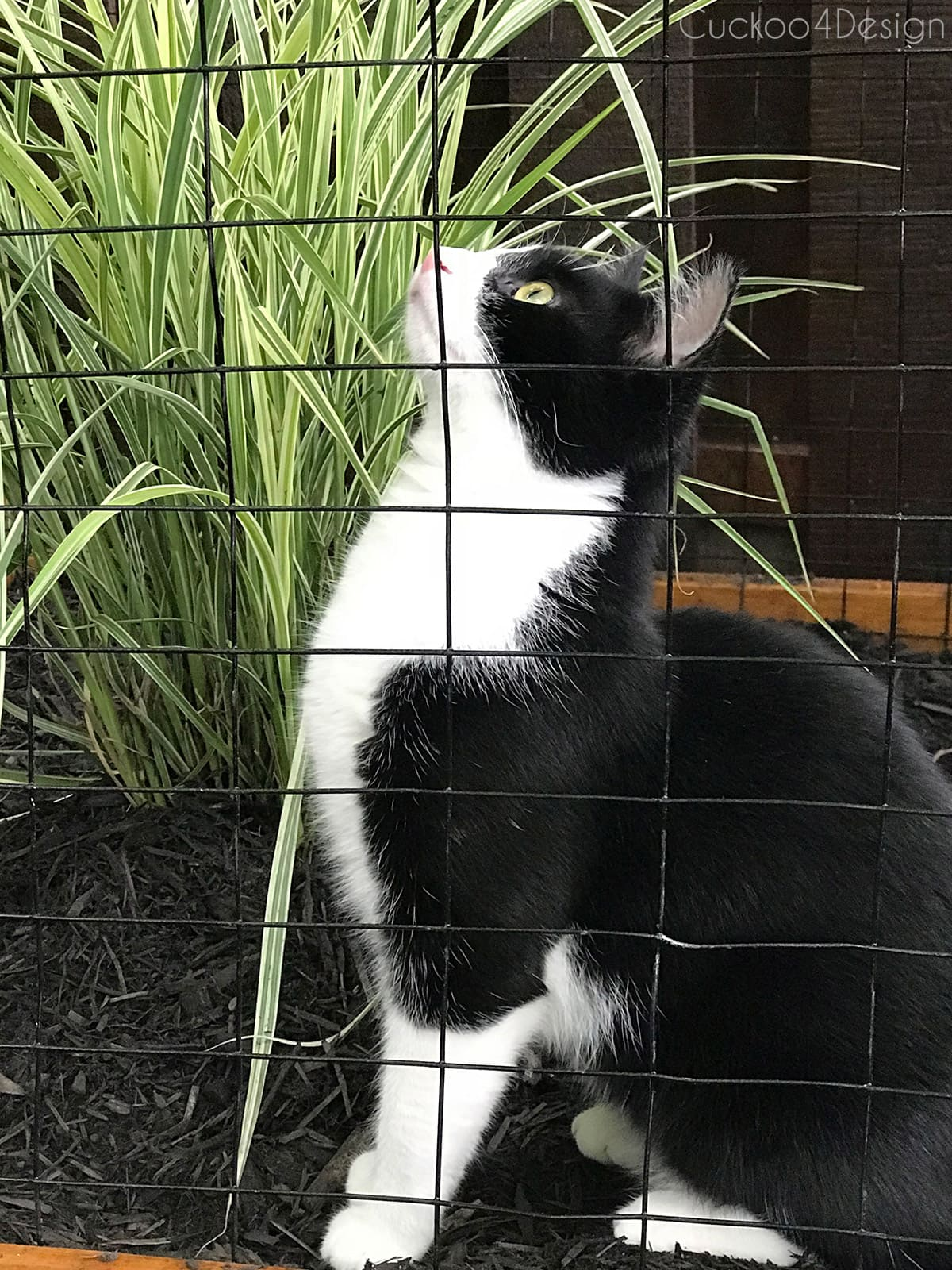 cat sitting in outdoor cat enclosure