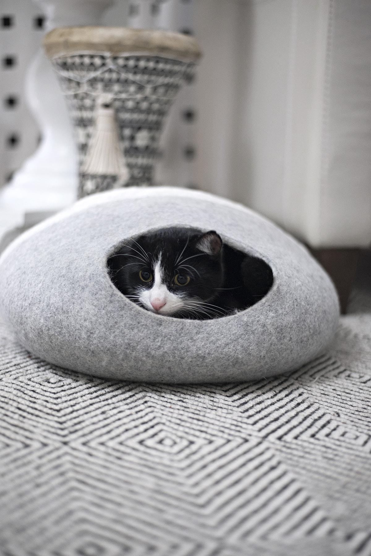 tuxedo cat hiding inn cat cave