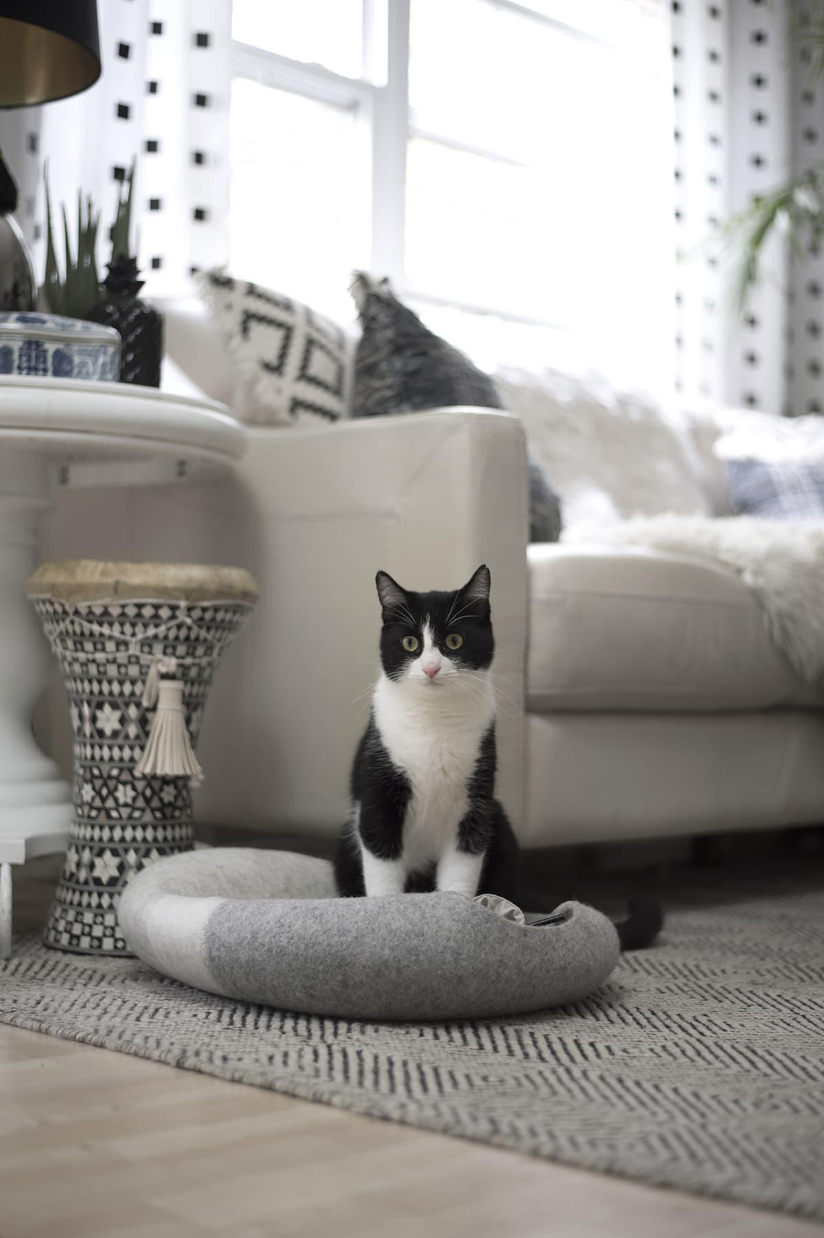 tuxedo cat sitting on top of cat cave