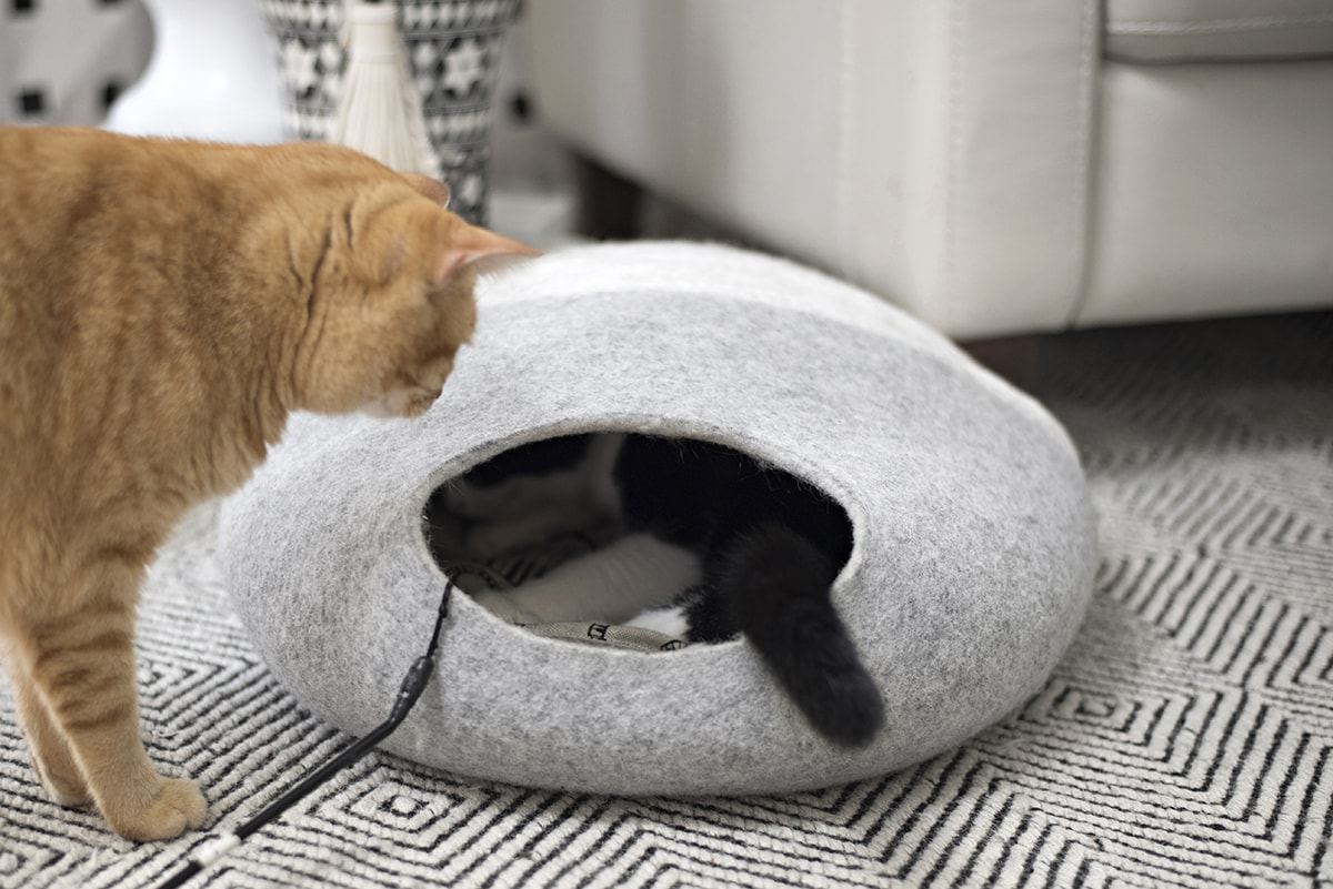 our cats checking out the new cat cave