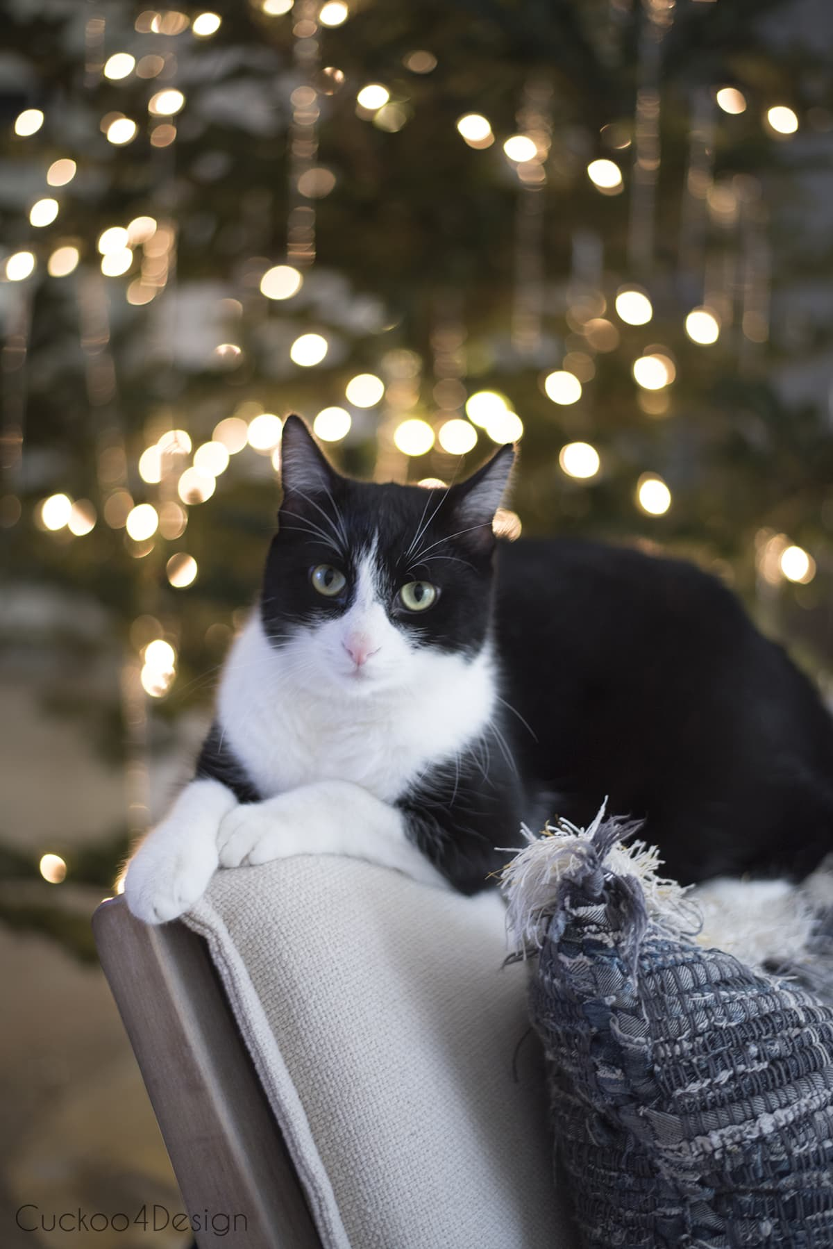our tuxedo cat posing in front of tree