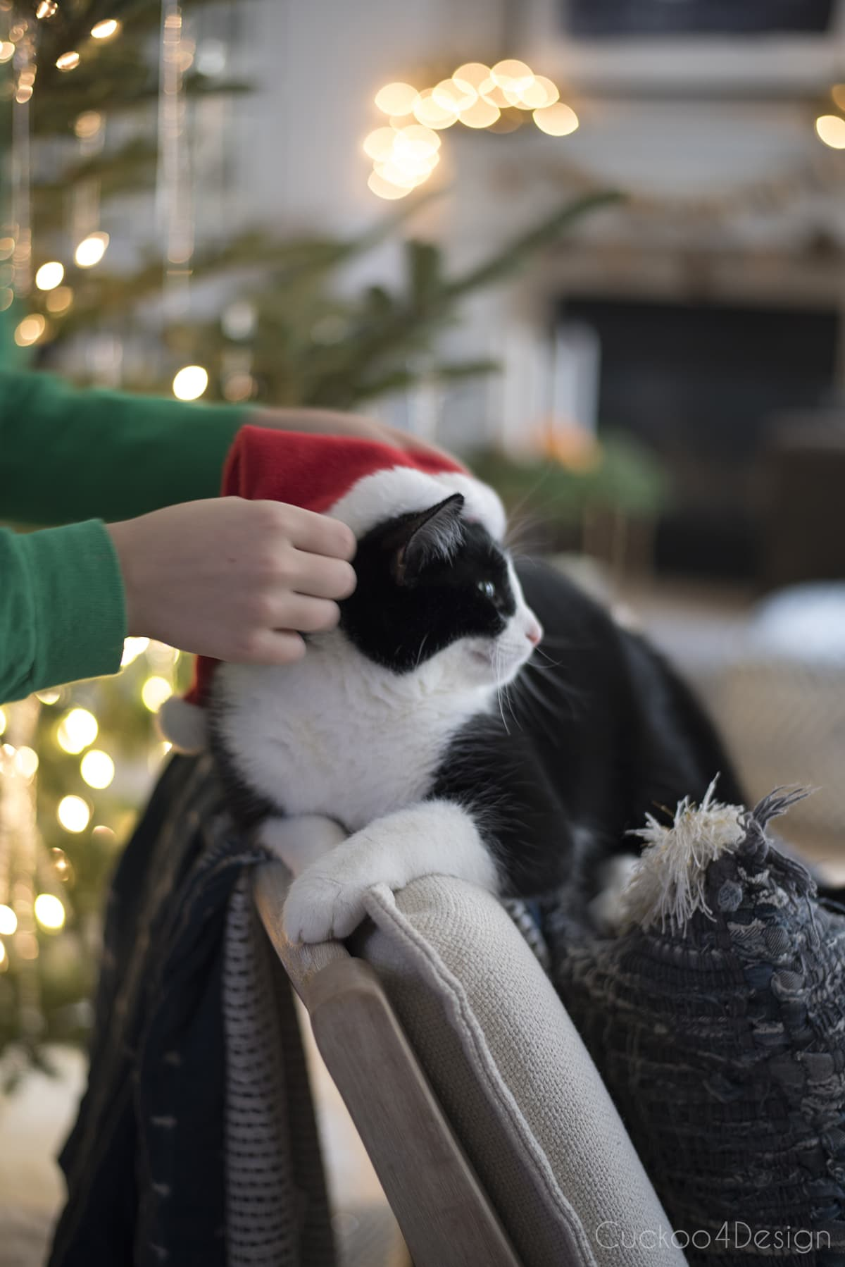 our tuxedo with Santa hat