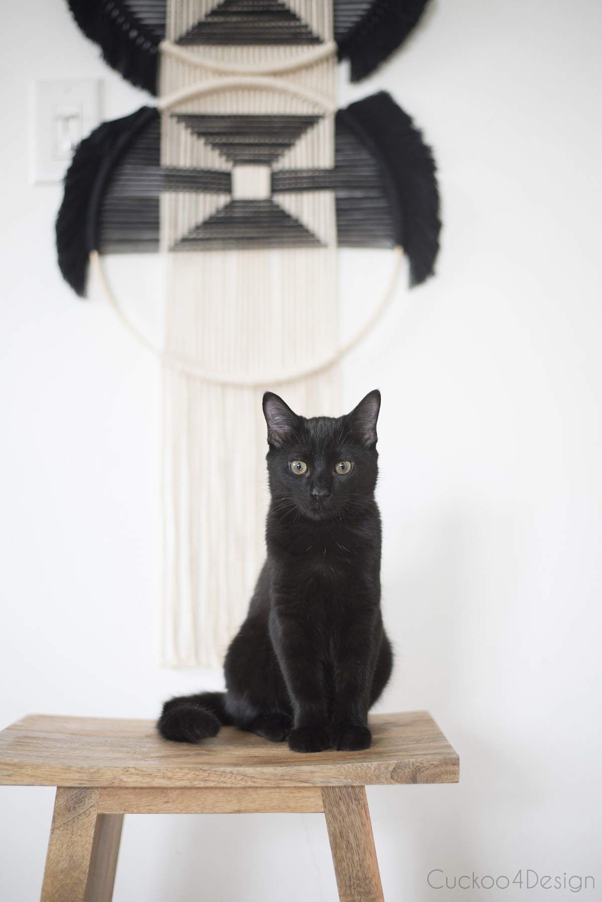 young black cat in front of wall weaving