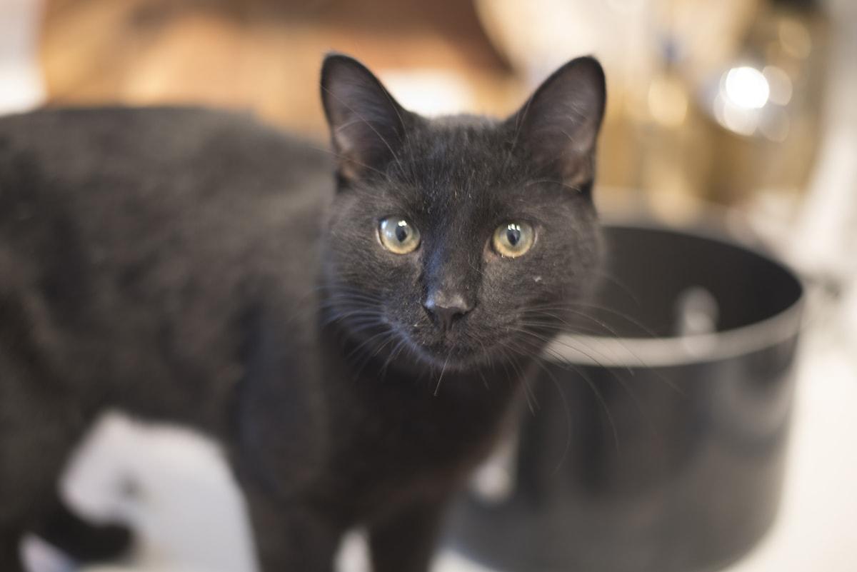 dirty black kitten