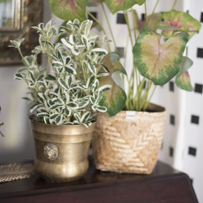 How to choose artificial house plants