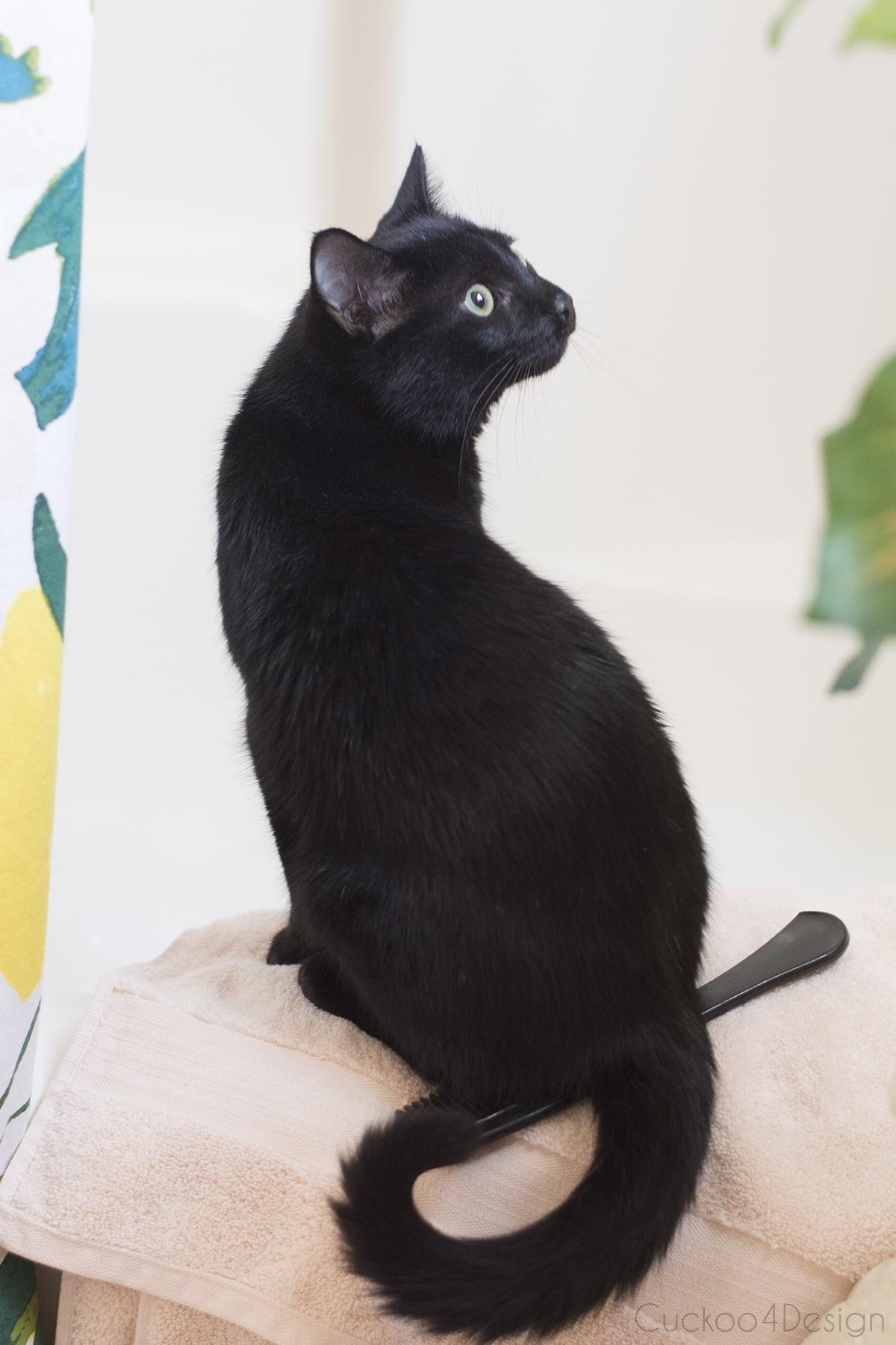black cat in blush bathroom