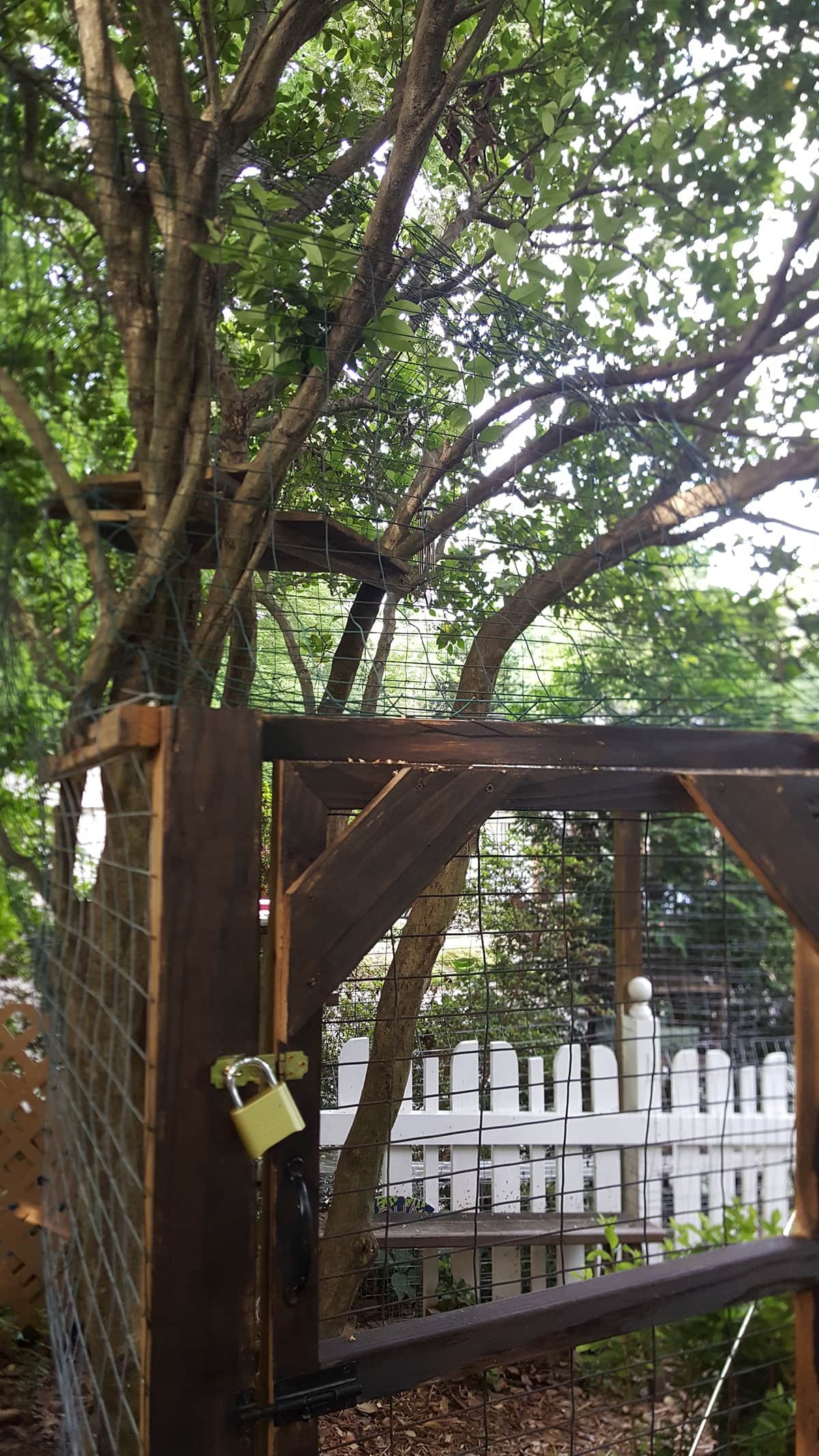 enclosed tree in outside cat enclosure