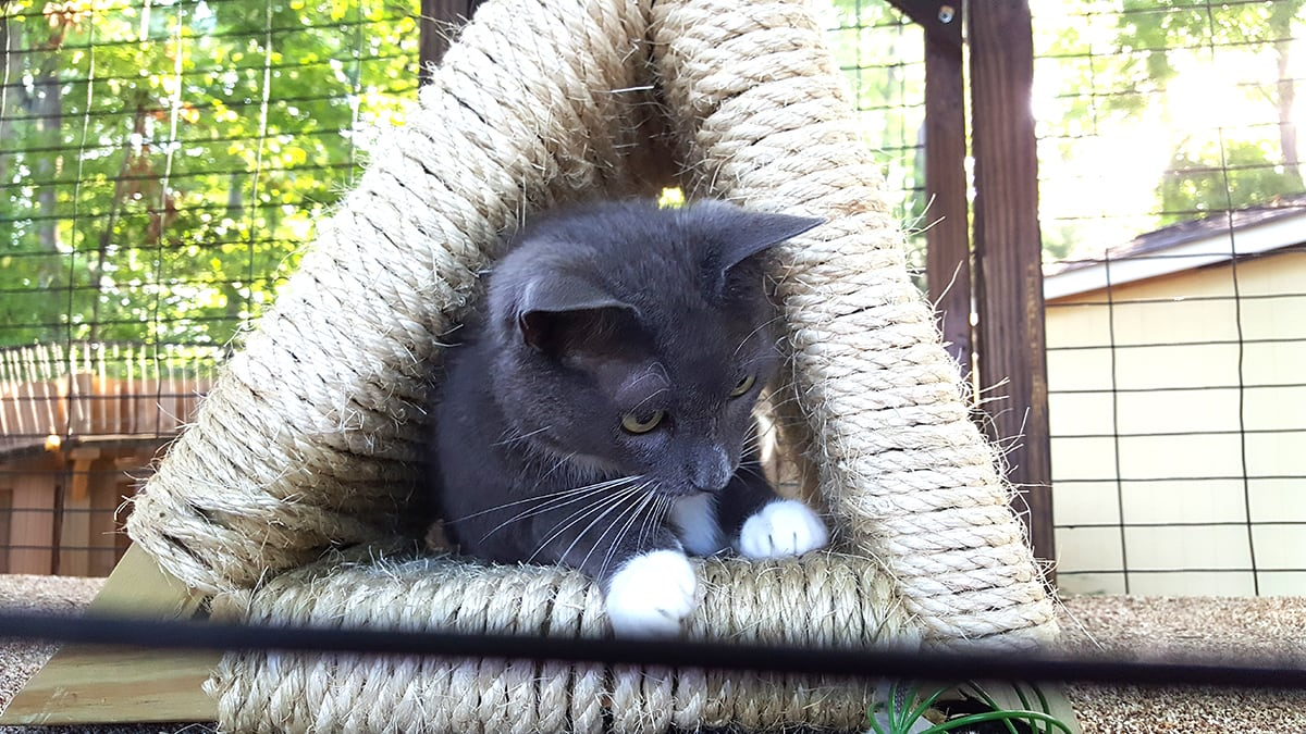 cats using their outside cat enclosures