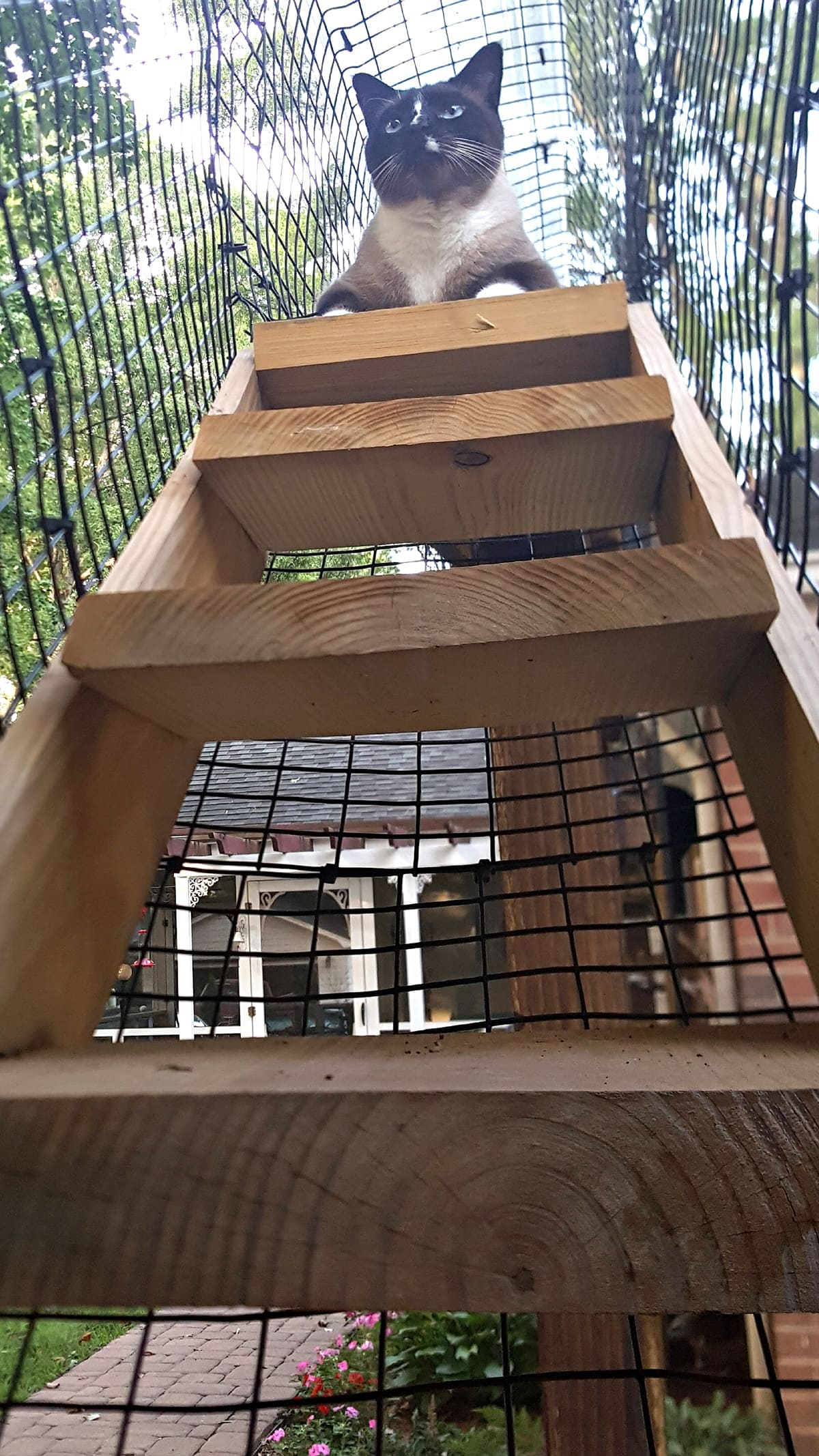 stairs in outside cat enclosures