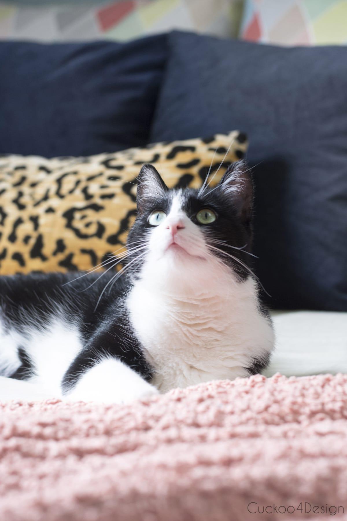 Willy the tuxedo cat