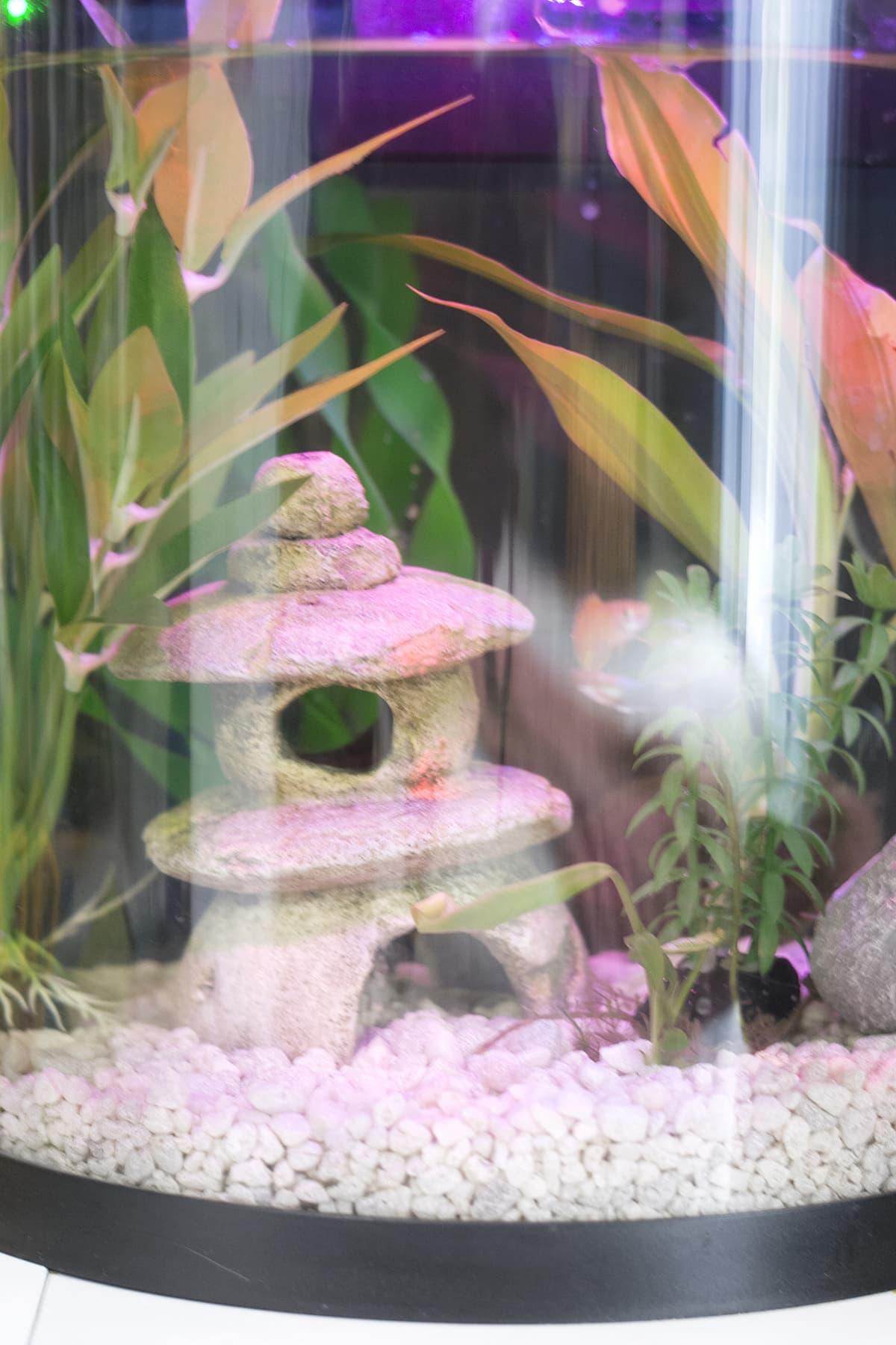 aquarium in my daughter's bedroom