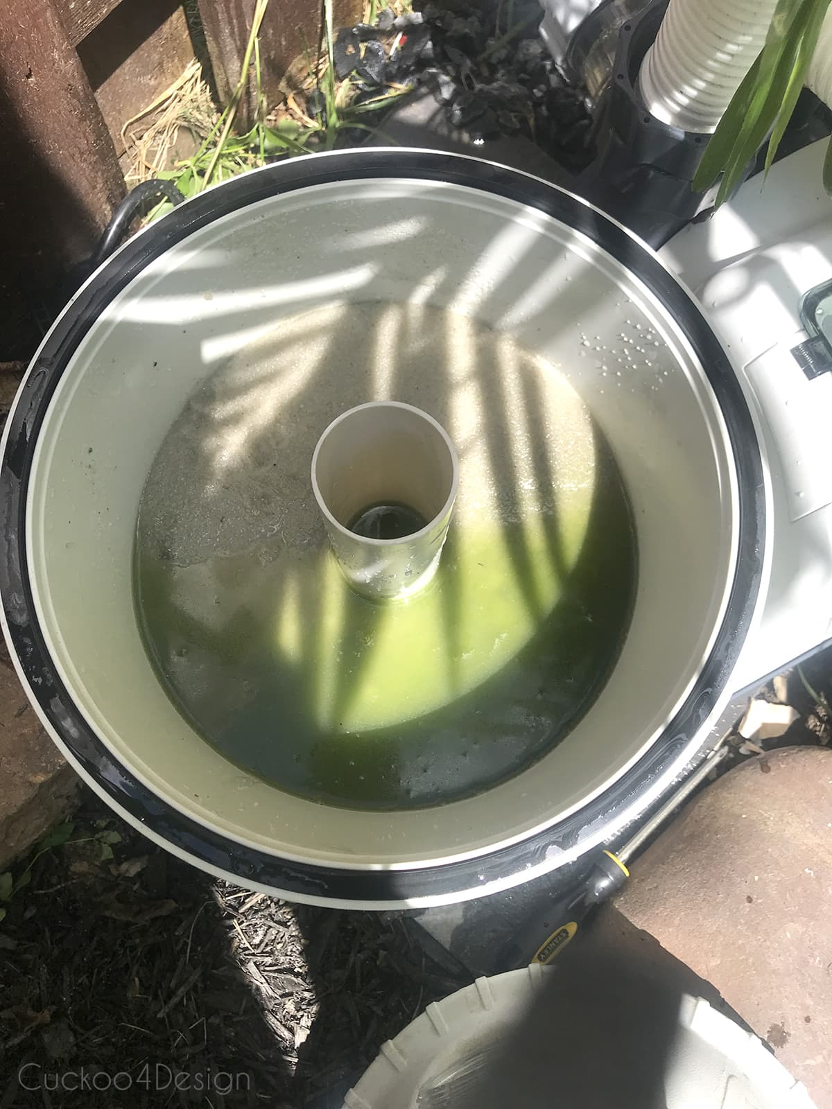 algae in index sand filter pool pump